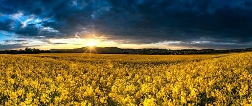фотография рассвета над полем
